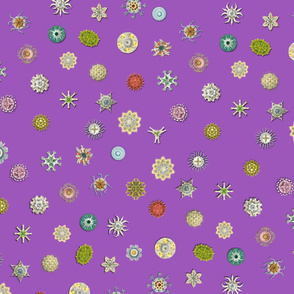 diatom_dot_purple