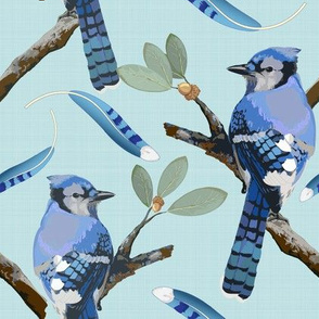 Blue Jays on Aqua