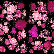 Rmagenta_roses_on_black_shop_thumb