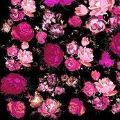 Rrmagenta_roses_on_black_shop_thumb