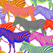zebras on drugs