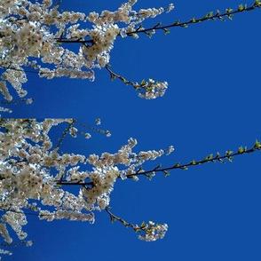 Sakura Blossom Blue