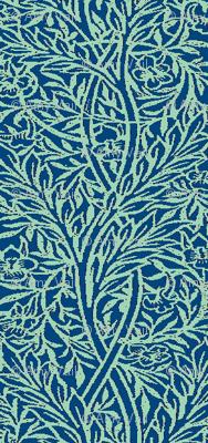 Peacock Vine