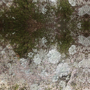 Mossy Wood 3