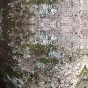 Mossy Wood 2