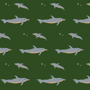 coloradodolphins