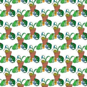 Frog party 1