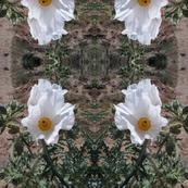 Desert Whites