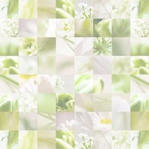 Macro collage