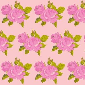 heirloom rose  pink