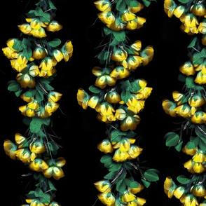 Fiaba Yellow Roses