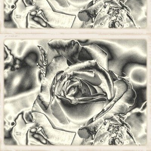 Photograph 3435 chrome rose