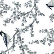 Backyard_Birds_square_REPEAT_side
