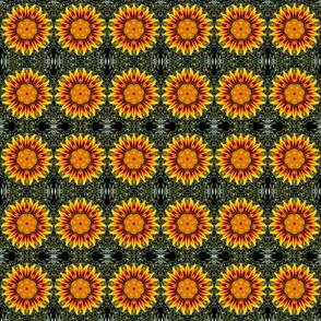 Sunflower Flame