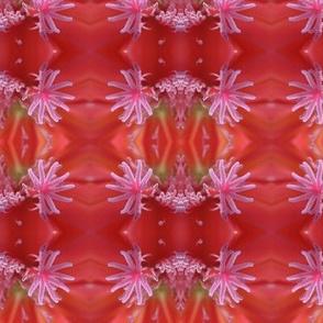 Big red cactus flower!