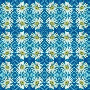 White daisy argyle