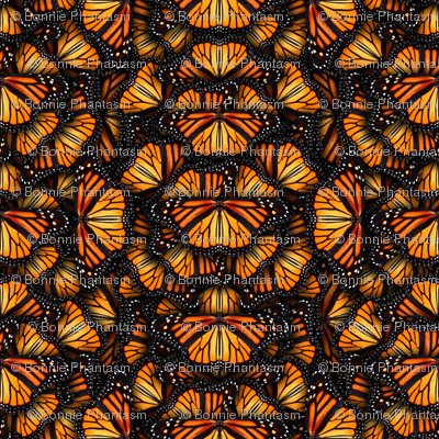 Heaps of Orange Monarch Butterflies