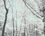 Woods1_to_print_thumb
