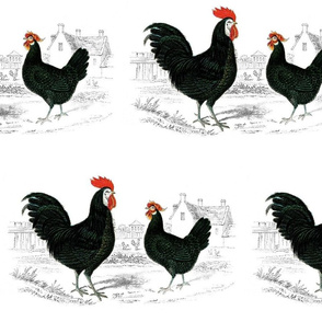 French Country Chickens
