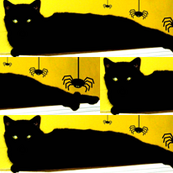 Spiders and Black Cats - Boo!