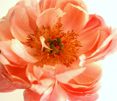 Rretro_blooms_comment_342276_thumb