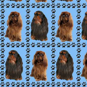 English Toy Spaniels and Paw Priints