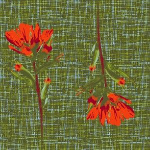 indian paintbrush borders