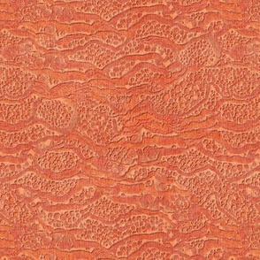 encrusted coral