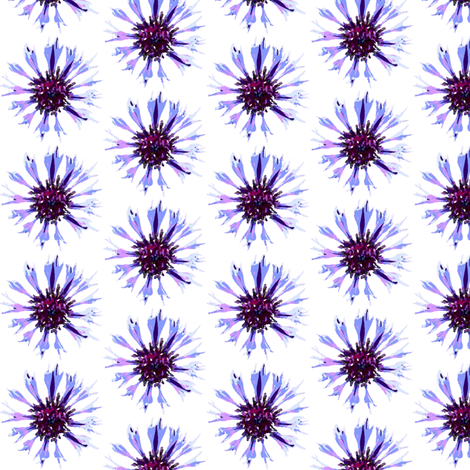 Cornflower on white fabric by vib on Spoonflower - custom fabric