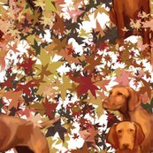 Rrrrrrrvizsla_and_autumn_leaves_shop_thumb