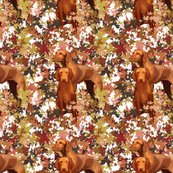 Rrrvizsla_and_autumn_leaves_shop_thumb