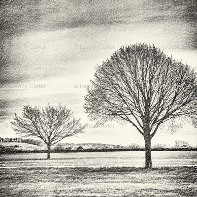 Charcoal Trees reflected.