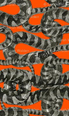 Snake Stripe ~ Disdain and Malice