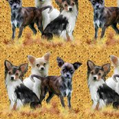 Rrchihuahua_grouping_shop_thumb