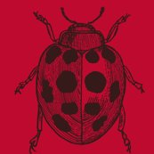 Rrrrrrrrresized_lady_bug_v3_shop_thumb