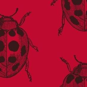 LadyBug, LadyBug - Red