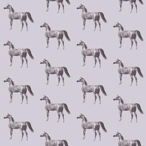 Arabian Horse on Smokey Grey, Small