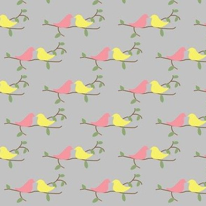 Lovebirds, gray