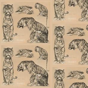 Meheut tigers