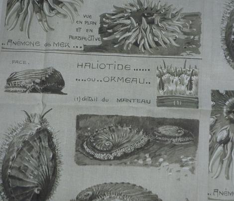 Maheut anemone