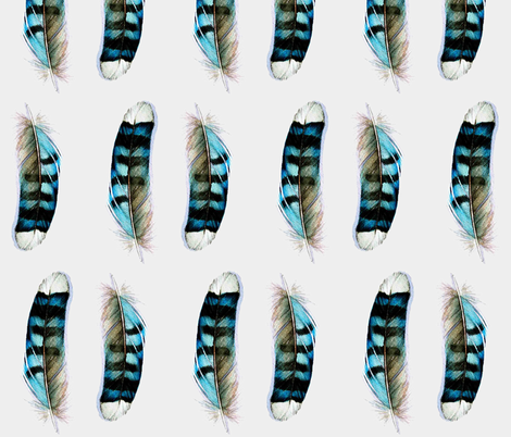Blue Jay - Feathers Collection fabric by jodyvanb on Spoonflower - custom fabric