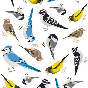 Ontario Bird Scatter