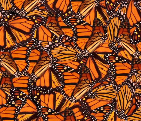 Monarch Butterfly fabric by jenfur on Spoonflower - custom fabric