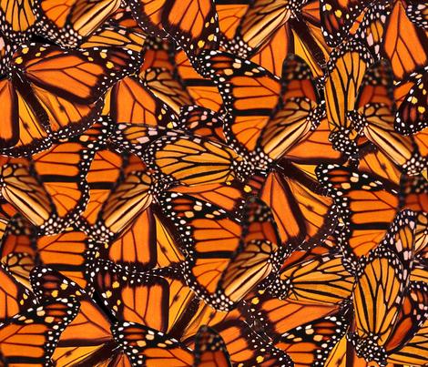 Monarch Butterfly fabric by jenfur on Spoonflower - custom fabric