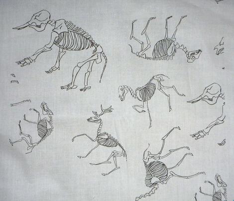 Ungulate Skeletons White