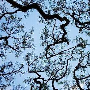 Tree Bran...