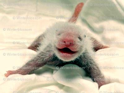 In the beginning - Baby Panda