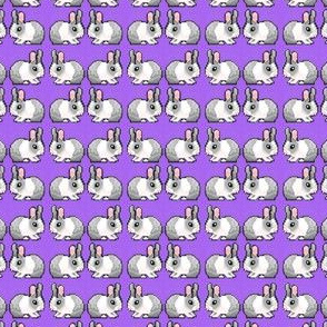 Purple Bunnies