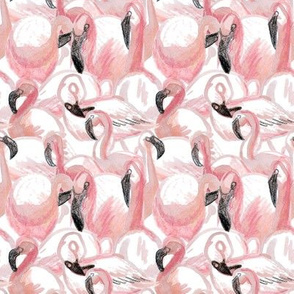 All the flamingos