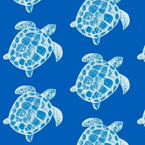 Loggerhead Sea Turtle the blues